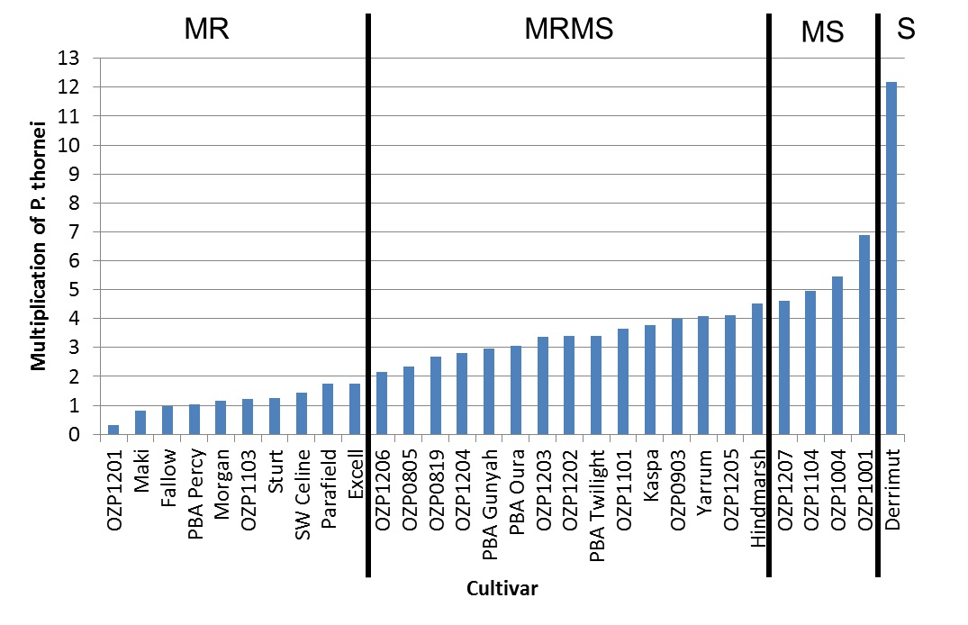 Figure 5. Multiplication rates of Pratylenchus thornei (and provisional resistance ratings) in the presence of field pea cultivars compared to a fallow, susceptible wheat (DerrimutA), and a MRMS barley (HindmarshA).