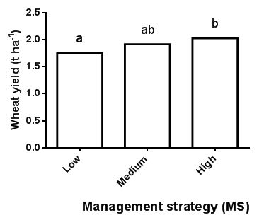 Figure 3: Wheat yield for low (MS1), medium (MS2) and high intensity management strategies (MS3) at Frances in 2015. Because herbicide effect on wheat yield was non-significant data were combined over herbicide treatment and presented as the mean of management strategy. Different letters indicate significant differences between means.