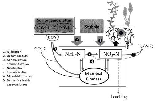 Figure 1: Biological processes involved in nitrogen cycling that influence plant available nitrogen levels in soil. SOM – soil organic matter, DON – dissolved organic nitrogen, POM – particulate organic matter.