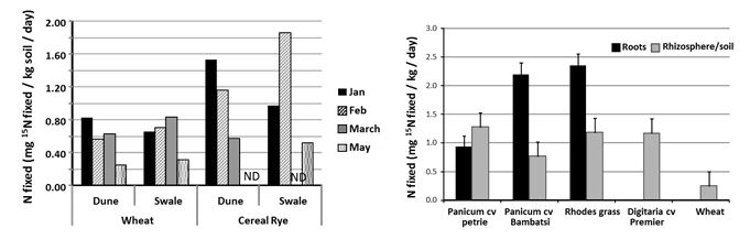 Figure 4: Amount of FL-N fixation in soils collected from field experiment at Karoonda in SA during summer of 2011/12 (left) and with summer-active perennial grasses (right).