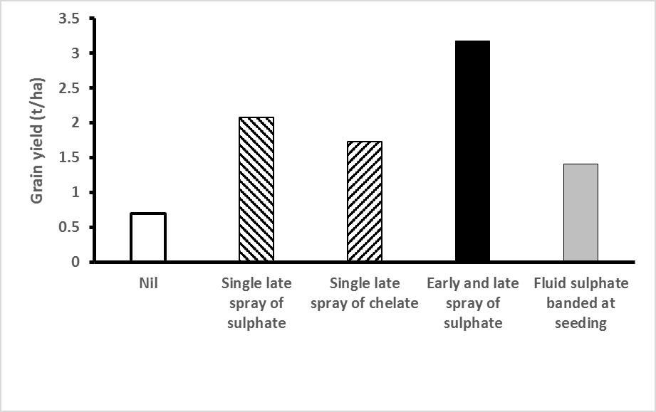 Figure 2: Effectiveness of four application strategies for treating Cu deficiency in wheat. Foliar sprays were applied at 90g Cu/ha, the fluid at seeding at 1kg Cu/ha. Trial at Cummins, lower Eyre Peninsula, 2015.