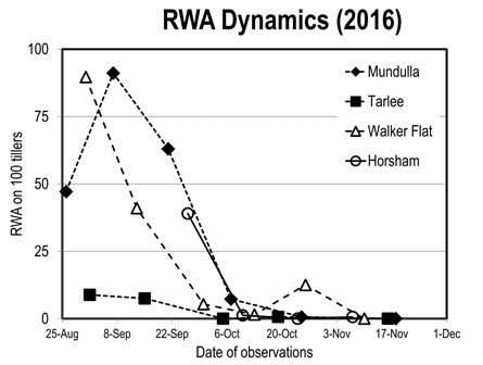 Line graph showing Russian Wheat Aphid population dynamics in an unsprayed paddock in four regions of SA and Victoria (average of four paddocks in each region).