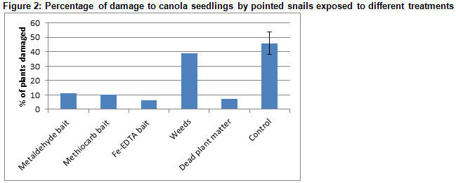 Figure 2: Percentage of damage to canola seedlings by pointed snails exposed to different treatments