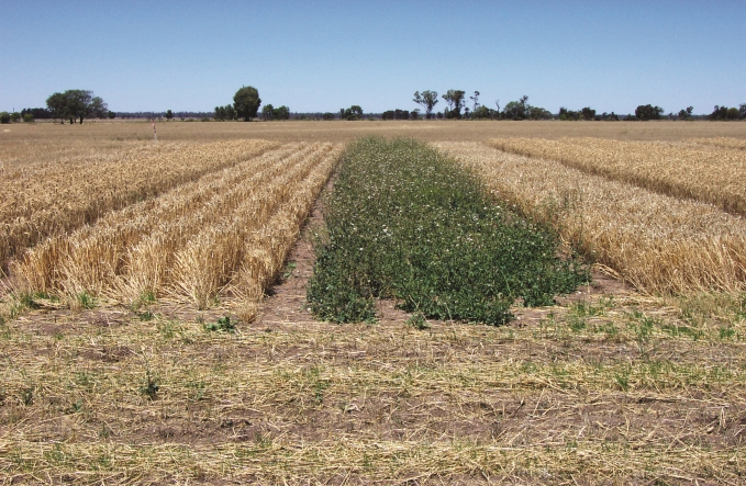 Difference in crop competition between high and low sowing rates