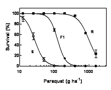 Figure 2: Response of paraquat resistant and susceptible populations of annual ryegrass and their cross to paraquat.
