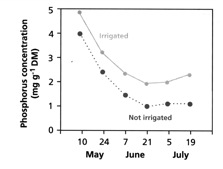 Figure 2.7  Phosphorus concentration in shoots of barley grown with and without irrigation (from Lambers et al 2008)