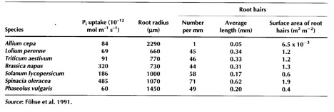 Table 2.4  Phosphorus uptake by seven plant species in relation to root morphology.