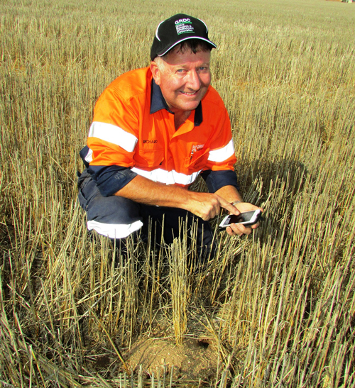 Grain grower Richard Konzag, of Mallala in South Australia, says recording information about mouse numbers and activity on his property via the MouseAlert app was a simple but important exercise