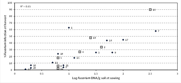 Figure 1. Relationship between at sowing DNA levels of Fusarium using PreDicta B® and incidence of crown rot infection at harvest – 'Unspiked' samples in 2013 Sites spiked with stubble represented by larger grey squares (sites 2, 4, 5, 8, 12, 16 and 18)
