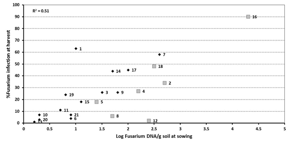 Figure 2. Effect of 'spiked' samples at 7 sites on the relationship between at sowing DNA levels of Fusarium using PreDicta B® and incidence of crown rot infection at harvest – 2013. Sites spiked with stubble represented by larger grey squares (sites 2, 4, 5, 8, 12, 16 and 18)